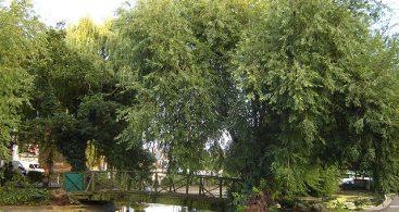 Clapton Duck Pond